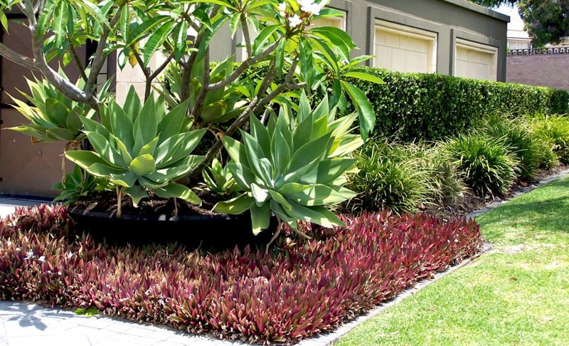 Gardening and Landscaping for Perth Homes | Very Ventura Lifestyle Blog