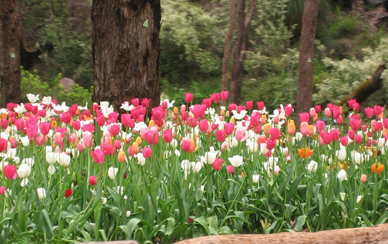 Some of the beautiful flowers at Araluen Botanic Park